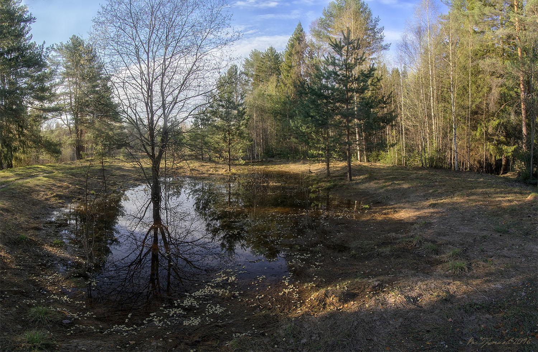 Пейзаж леса