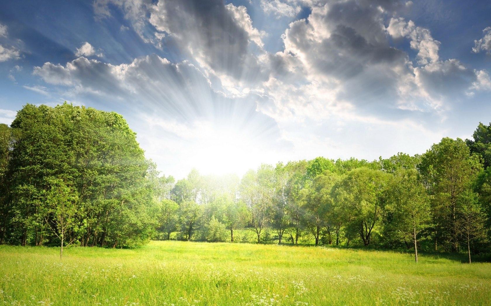 Светлая поляна