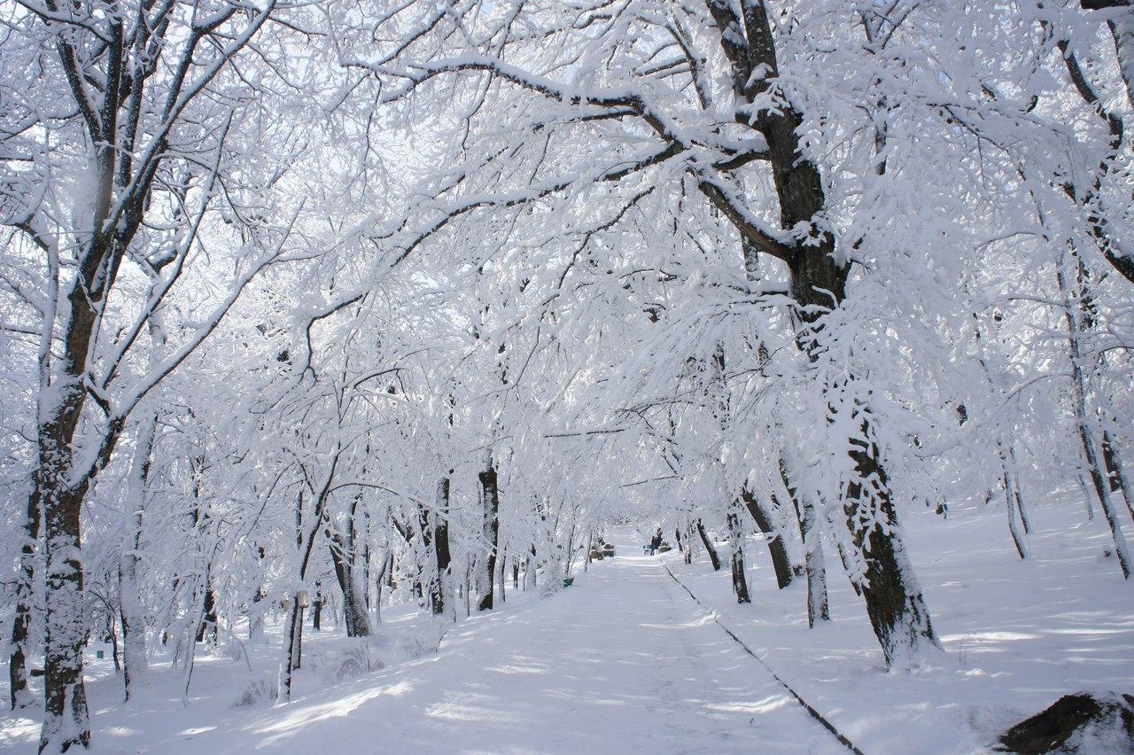 Снег дневник аарона