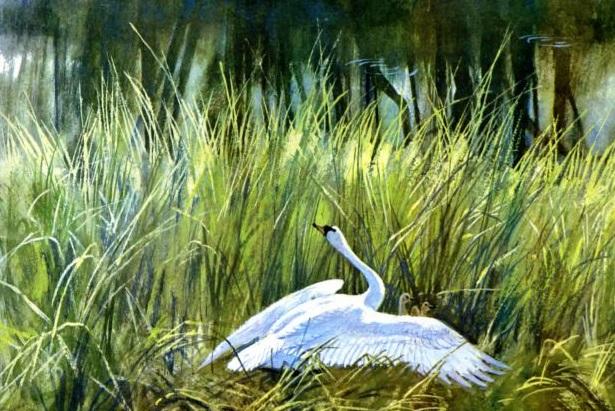 лебедь кустарники природа