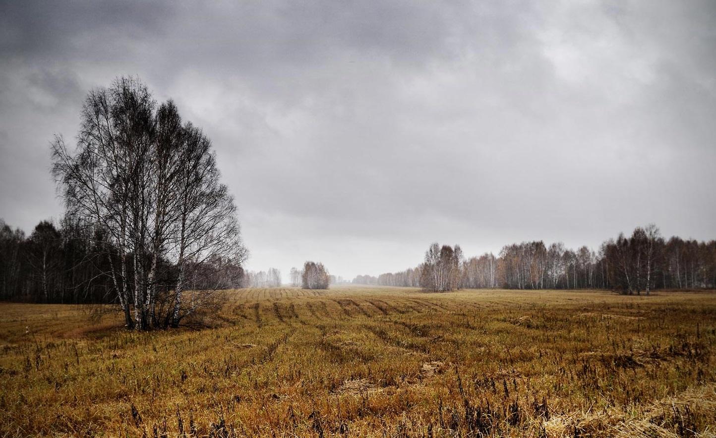 Деревья поле небо затянуто облаками