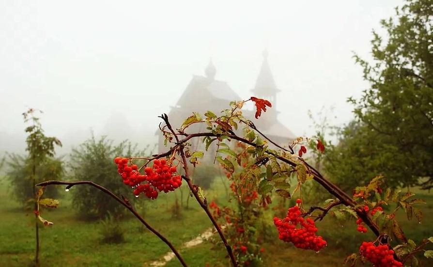 рябина туман доман