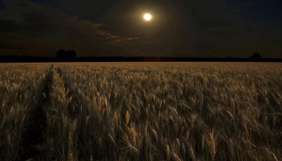 луна рожь поле ночь
